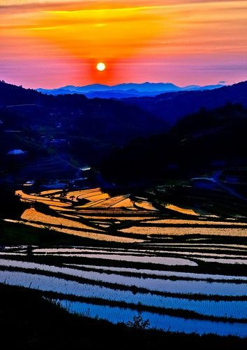 Terraced rice fields, #okayama #japan
