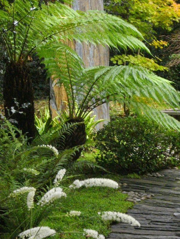 17 meilleures id es propos de foug res de jardin sur for Piscine fougeres