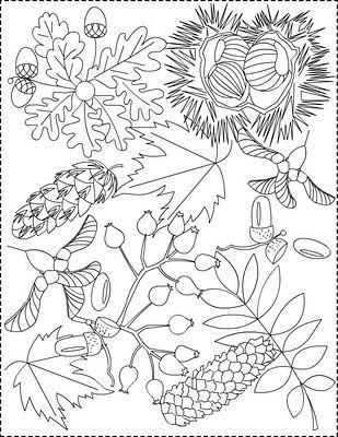 Podzimní plody - omalovánka
