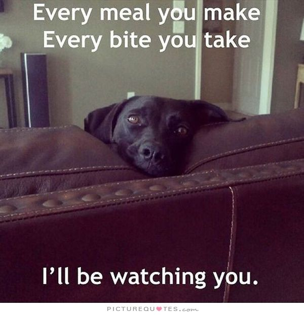 I Ll Be Watching You Funny Animals Dog Puppy Beg Dog: Every Meal You Make, Every Bite You Take, I'll Be Watching