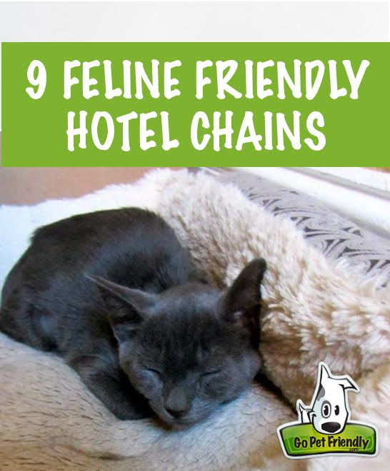 Nine Cat Friendly Hotel Chains