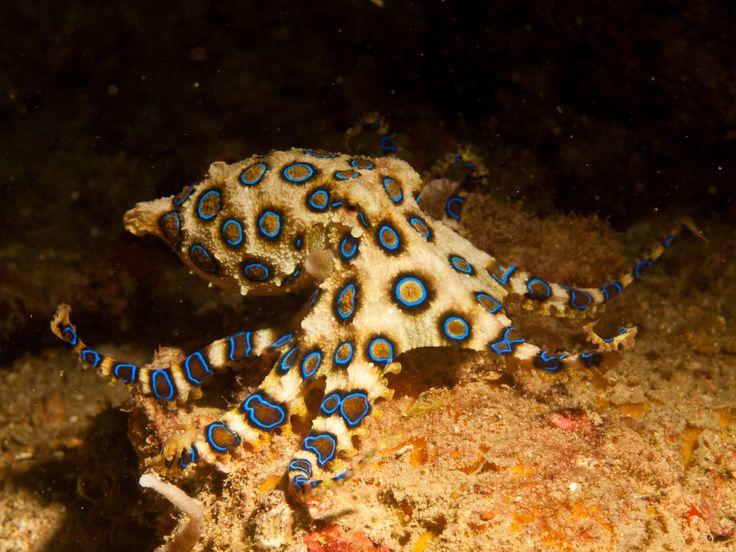 8 Coolest Octopods In The Oceans
