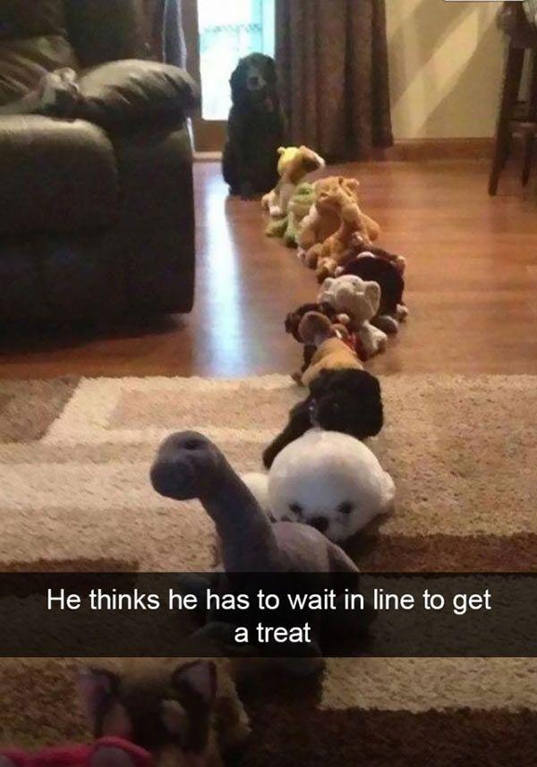 17 Funny Dog Snapchats
