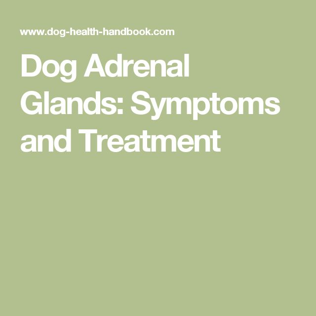 Dog Adrenal Glands: Symptoms and Treatment