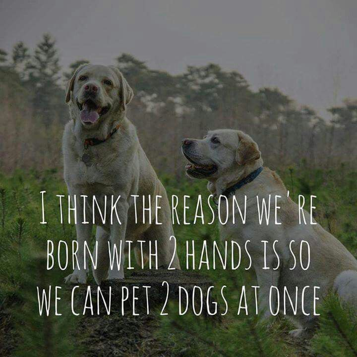 Quotes For Dog Pictures