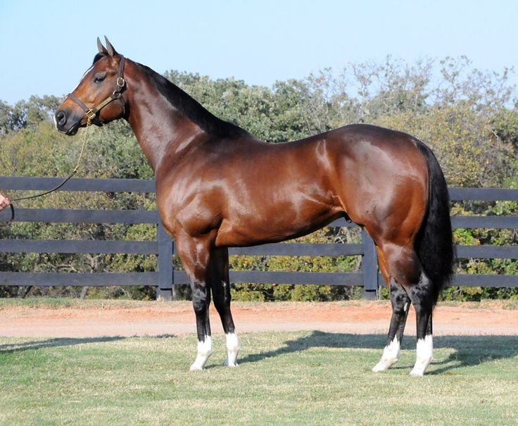 BBR is excited to welcome this awesome Young Gun Stallion ...