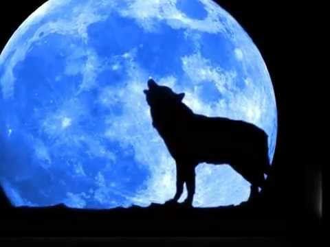 Bobby Vinton - Blue Moon 가사 노래 듣기
