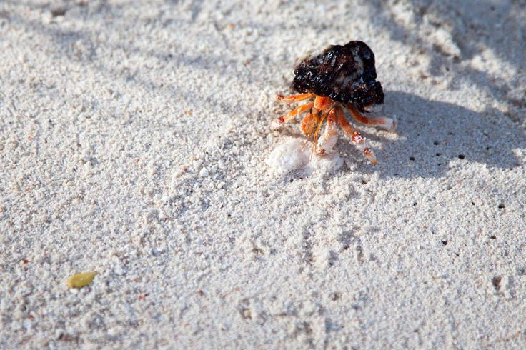 Mr Crabs Filitheyo Island, Maldives, paradise on earth, travel, vacation, beautiful place, wanderlust, tropic, palm tree
