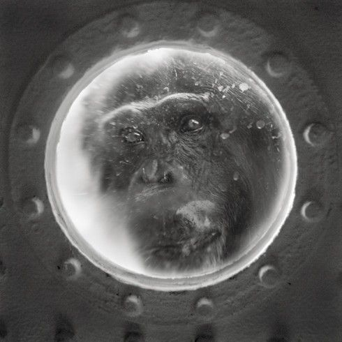 Looking Beyond the Glass: An Awakening Portrayal of Primates in Captivity (PHOTOS) - Anne Berry