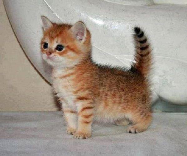 Photo bébé chat