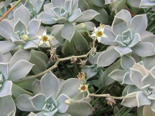 Πουλημένος - Κάκτοι και παχύφυτα - Poulimenos Cactus and Succulents