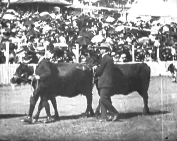 [Click to view film] Royal Show 1909. More information on film content can be found on the SLWA Catalogue. http://encore.slwa.wa.gov.au/iii/encore/record/C__Rb1384885__Sroyal%20show%201909__Orightresult__U__X6?lang=eng&suite=def