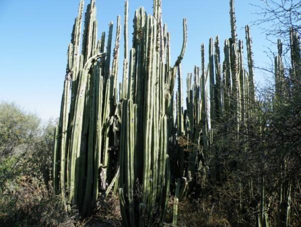 25 Nombres De Plantas Del Desierto Lista Características Y Fotos Plantas Del Desierto Nombres De Cactus Plantas