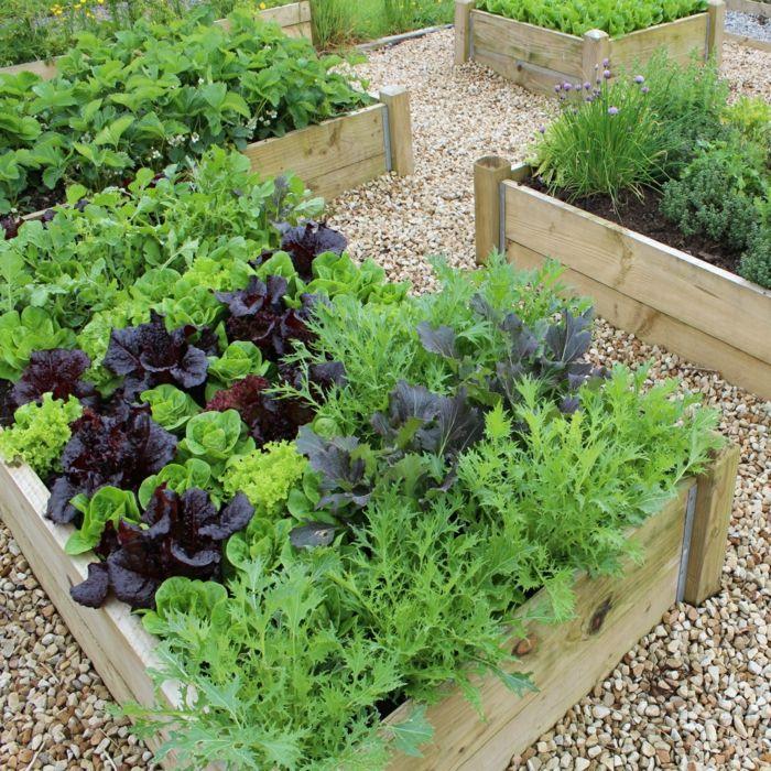Wonderful Hochbeete Garten Pflanzen Kieselsteine
