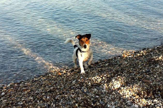 Hundestrände am Gardasee