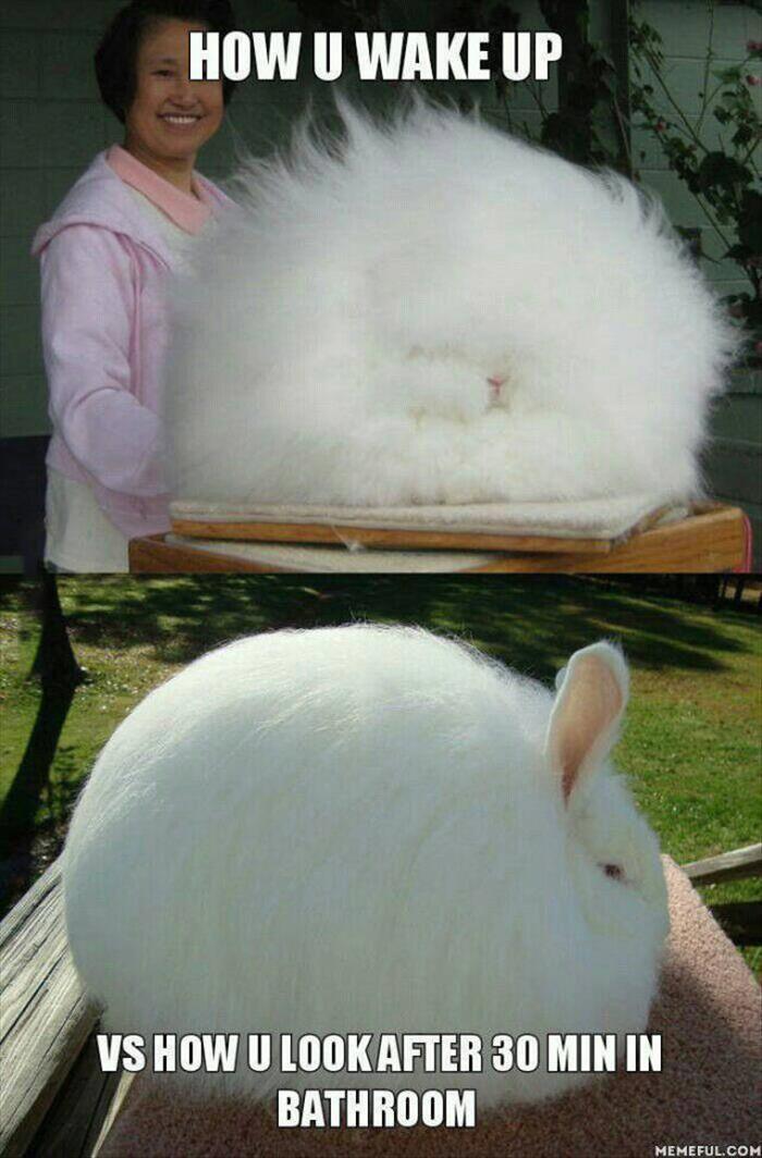 Lustige Tiere des Tages – 24 Bilder #sarcasticmemes – Memes