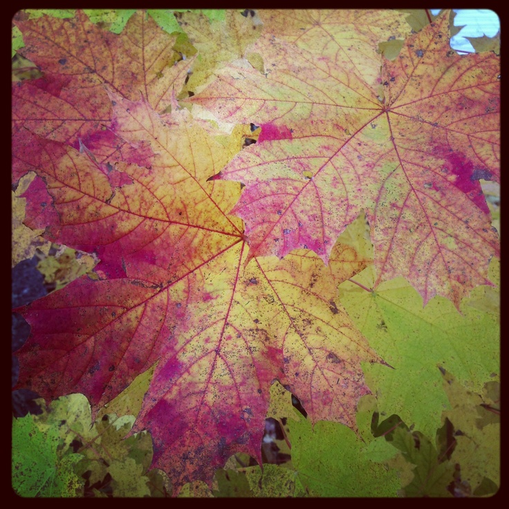 autumn leaves at home