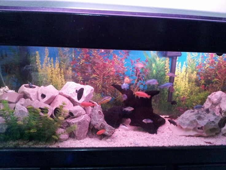 1000 images about tanks and ponds on pinterest aquarium for Aquarium background decoration