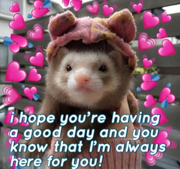 101 Have A Great Day Memes To Wish Someone Special A Good Day Cute Love Memes Cute Memes Good Day Meme