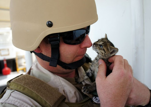 this story warmed my heart: Navy Sailors, A Kiss, Soldiers, Heart, A Real Man, Kittens, Cat Lovers, Kitty, Animal