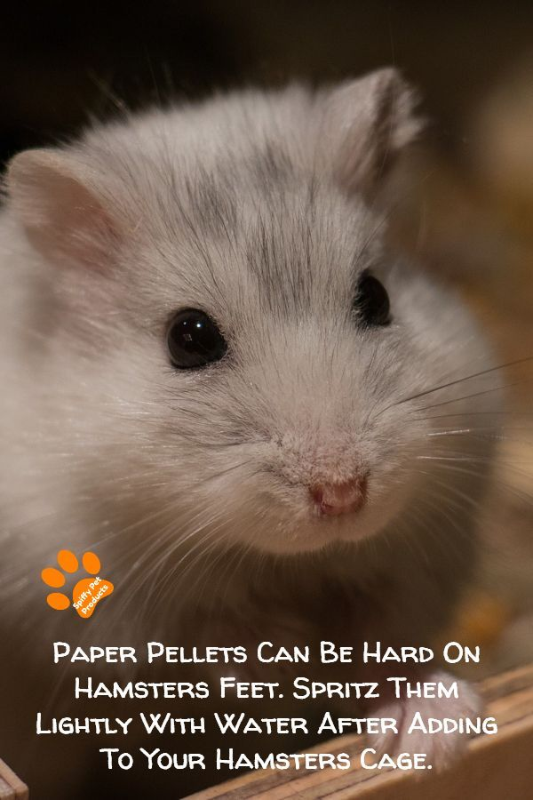 Best Hamster Bedding The Ultimate Guide For Syrian Robo Dwarf Hamsters 2020 In 2020 Hamster Bedding Hamster Hamster Care