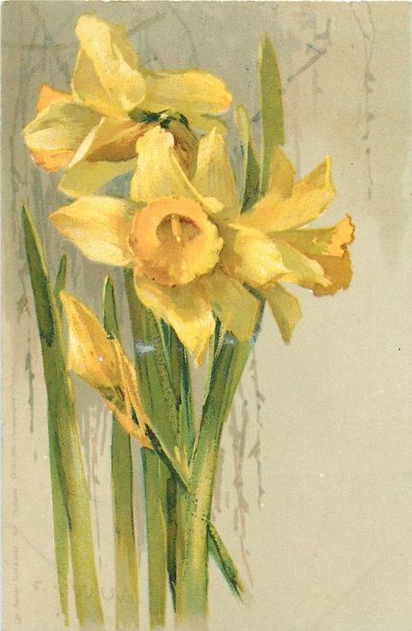 Daffodil by Loungees