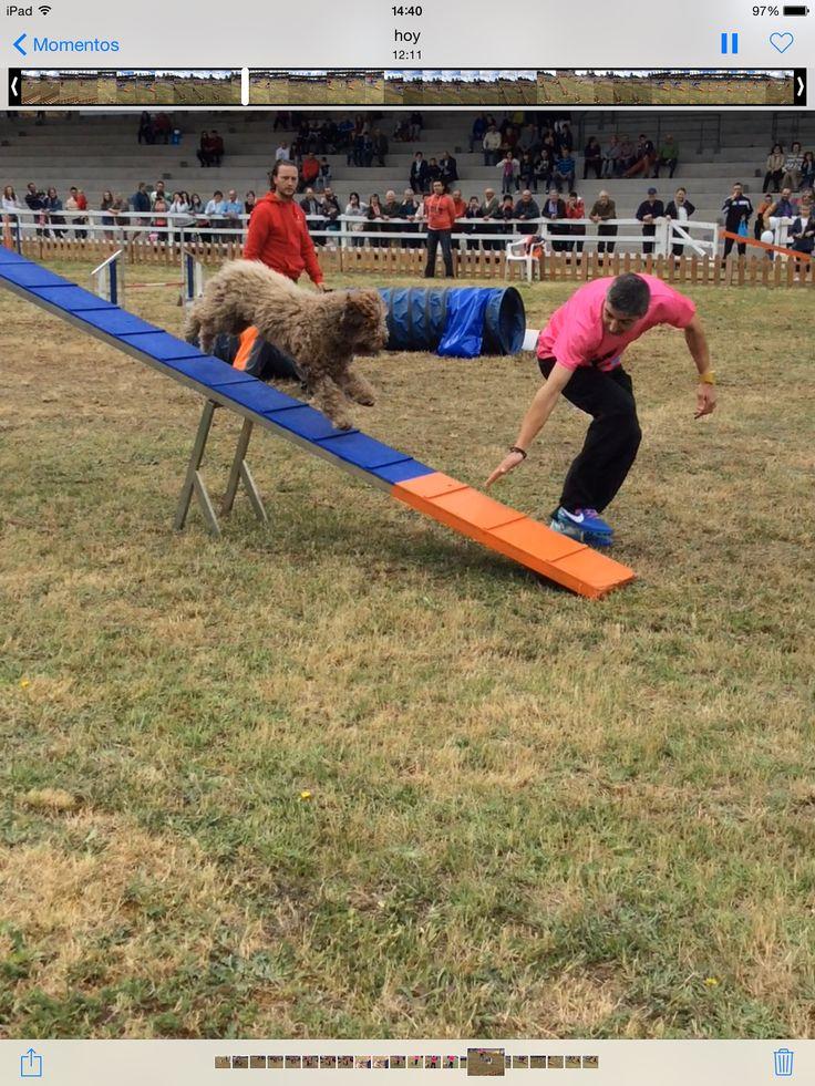 Campeonato de silleda 2015 agility