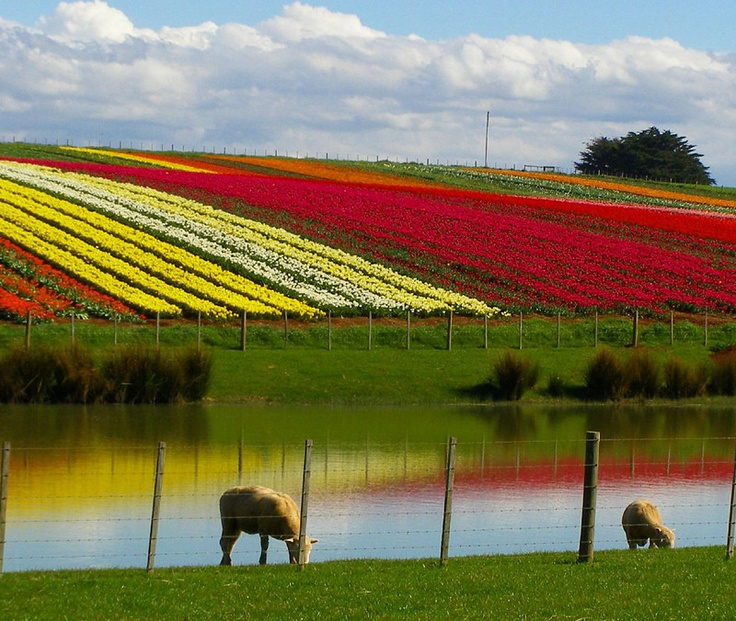 Tasmanian countryside #Australia : Catch highlights here http://catchystudio.com/amazing-places-to-visit-in-australia/