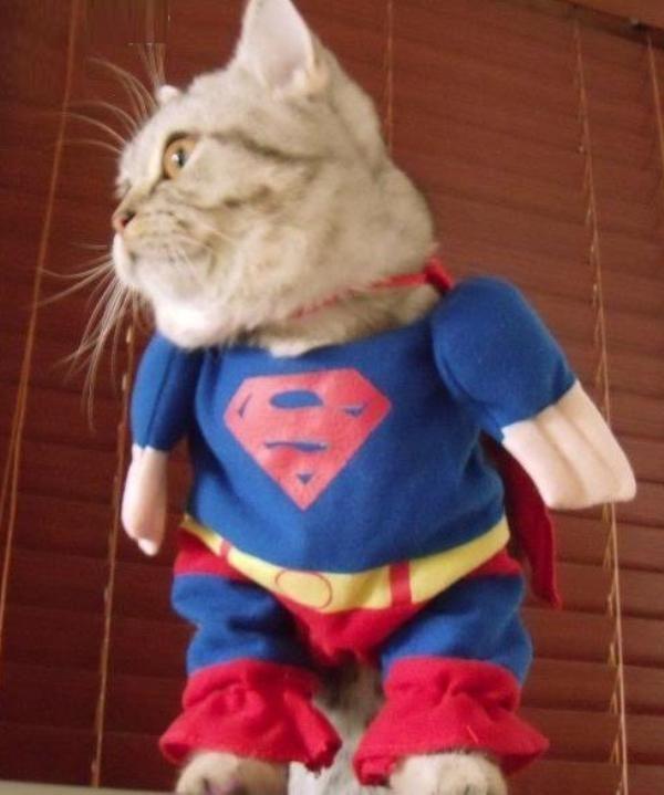 Google Image Result for http://cdn.pbh2.com/wordpress/wp-content/uploads/2011/11/cat-superman-costume.jpg