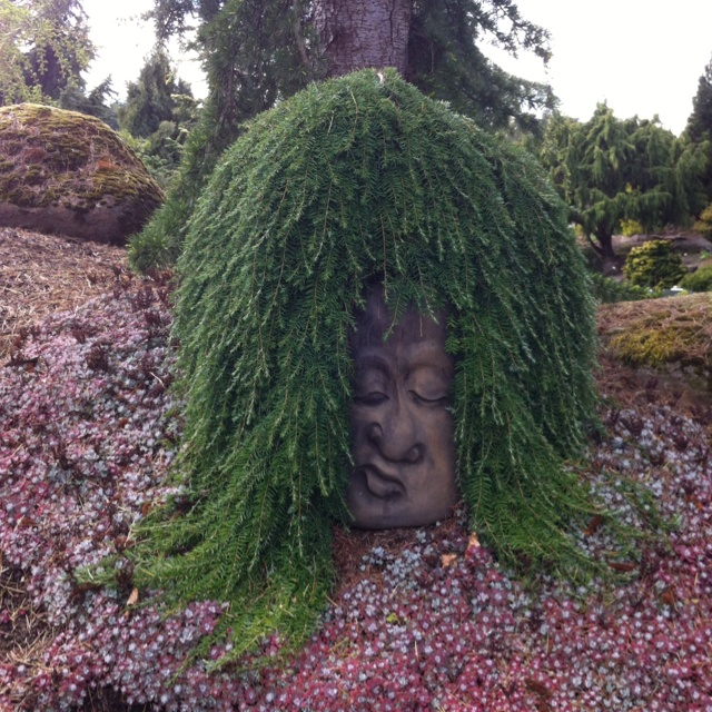 Garden Design Oregon 152 best conifer garden images on pinterest | landscaping ideas