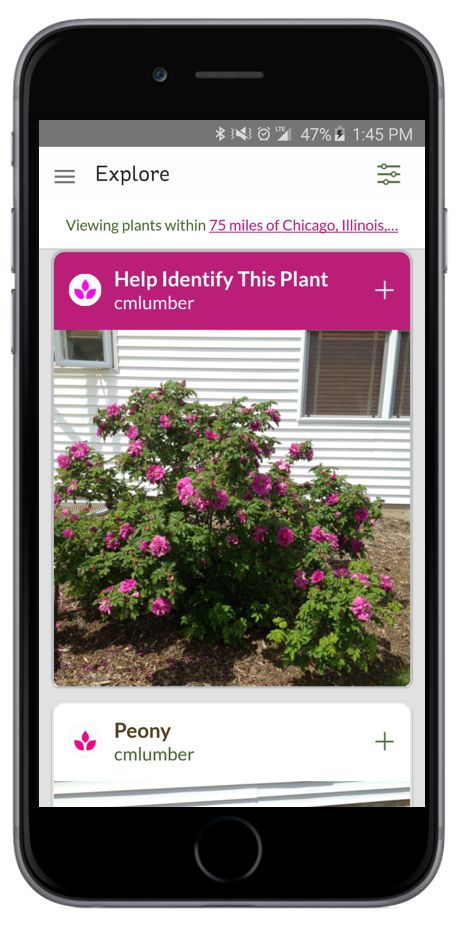 Do you have a mystery plant that you need identified? Check out GrowIt! the hottest app in the world of plants. Have plants identified or just see what people are growing around you.