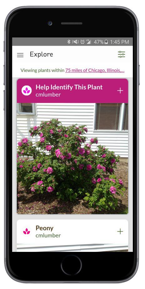 Flower Garden Ideas Illinois 482 best gardening tips and ideas images on pinterest | garden