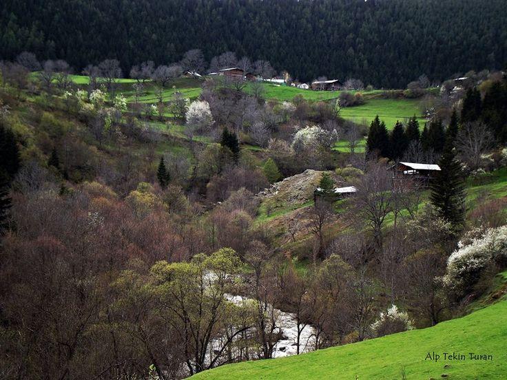 Artvin - Şavşat.  Fotoğraf: Alp Tekin Turan