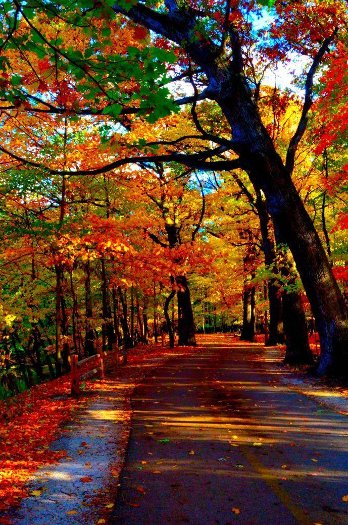beautiful autumn More