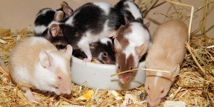 Могут ли выращенные в лаборатории мини-мозги заменить тестирование на животных?