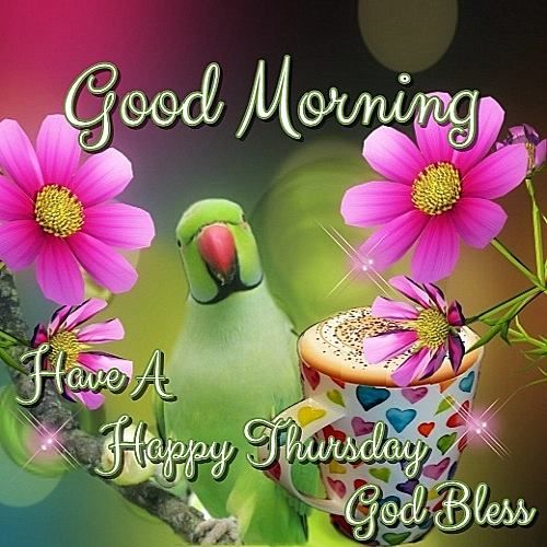 Good Morning, Have a Happy Thursday, God Bless #thursday happy thursday parrot coffee flowers colorful