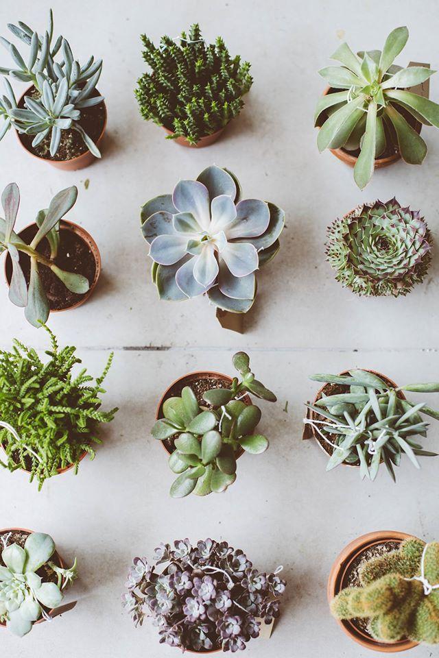 Plantitaaas!! Quedan re lindas como decoración