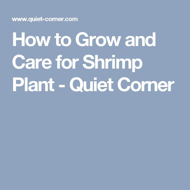 1000 ideas about jade plants on pinterest jade bonsai house plants and plants indoor. Black Bedroom Furniture Sets. Home Design Ideas