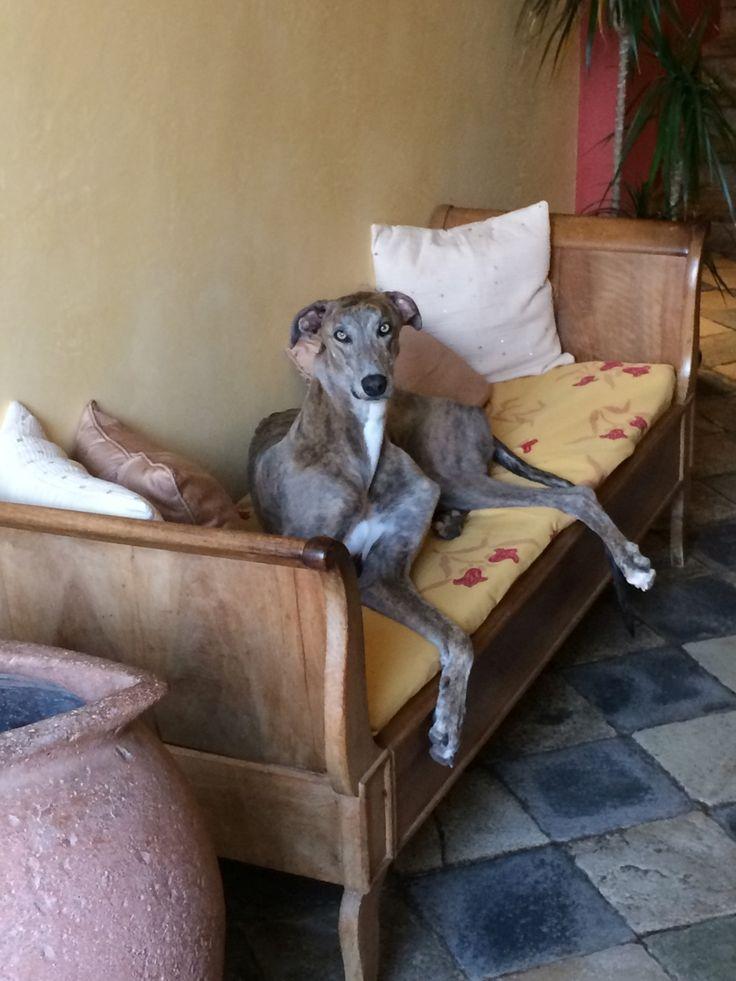 34 best Hôtel de charme Corse Balagne images on Pinterest - chambre d agriculture de corse du sud