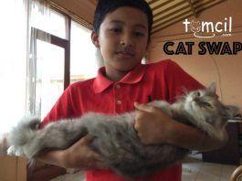 Cat Swap Chapter 1 | Storytelling for Children