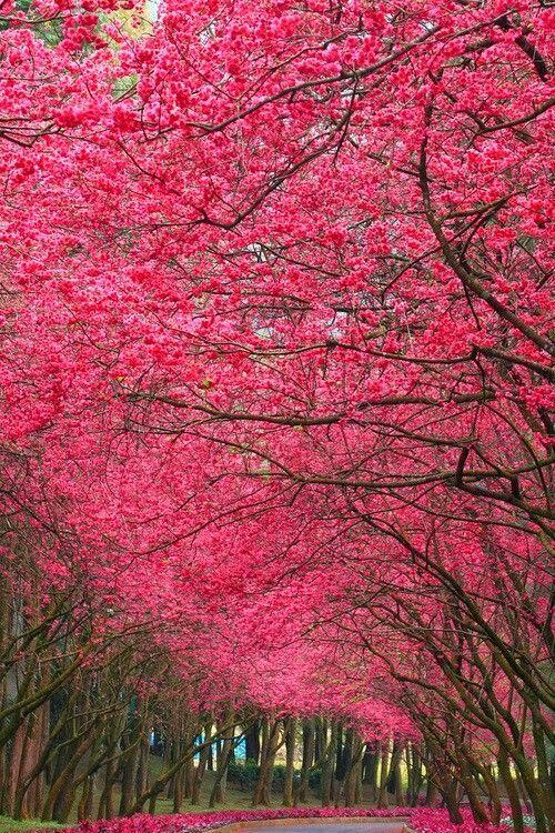 Lovely spring blossoms