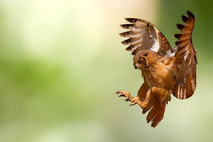 Flying by Stefano Ronchi
