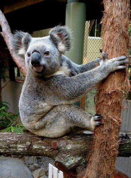 Daisy Hill Koala Centre. Free and pram/pusher friendly.