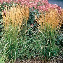 49 best tall border plants images on pinterest | flower gardening