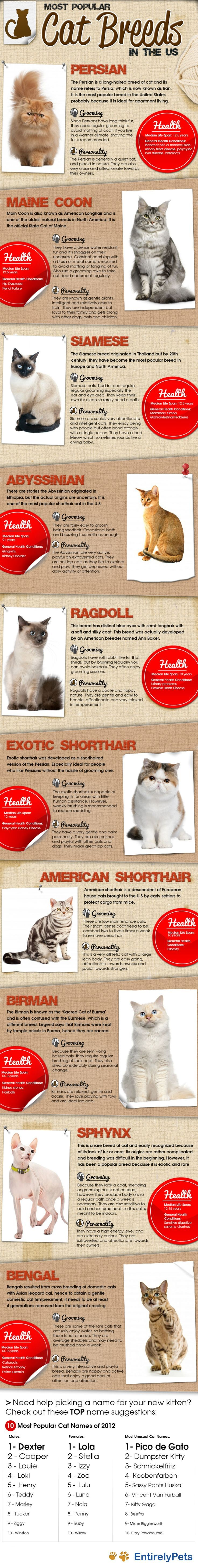 The Most Popular Cat Breeds in the US Infographic - Tap the link now to see all of our cool cat collections!