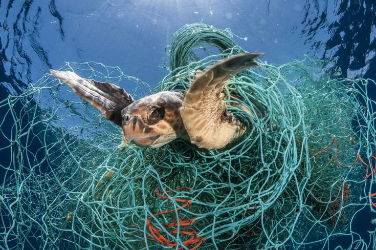 Urge seafood companies to protect ocean animals