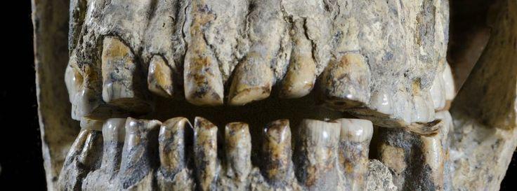 Urmenschen: Das Völkchen von Dmanisi