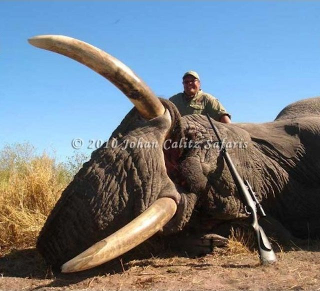 #BOYCOTT .@jimmyjohns as the owner thinks its ok to kill #elephants #lion #rhinos & more!!