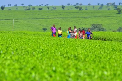 GREEN IS THE COLOUR: Nandi Hills is in Western Kenya and only a two hour drive from Kisumu and from Kericho and Eldoret. Placed high up in the hills you find Nandi Hills