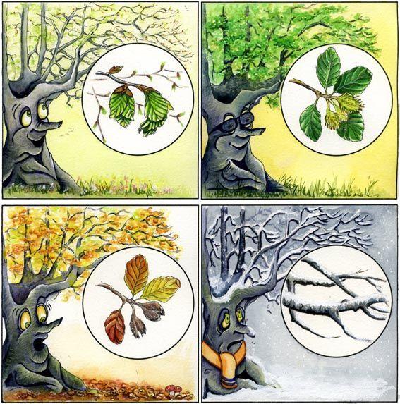 * De boom tijdens de 4 seizoenen....